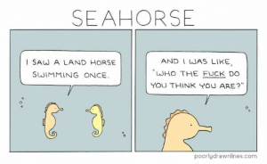 thumb_seahorse-and-i-was-like-i-saw-a-land-horse-62554107