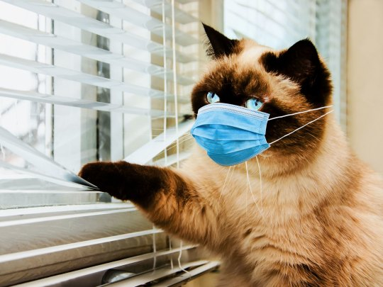 catvirus
